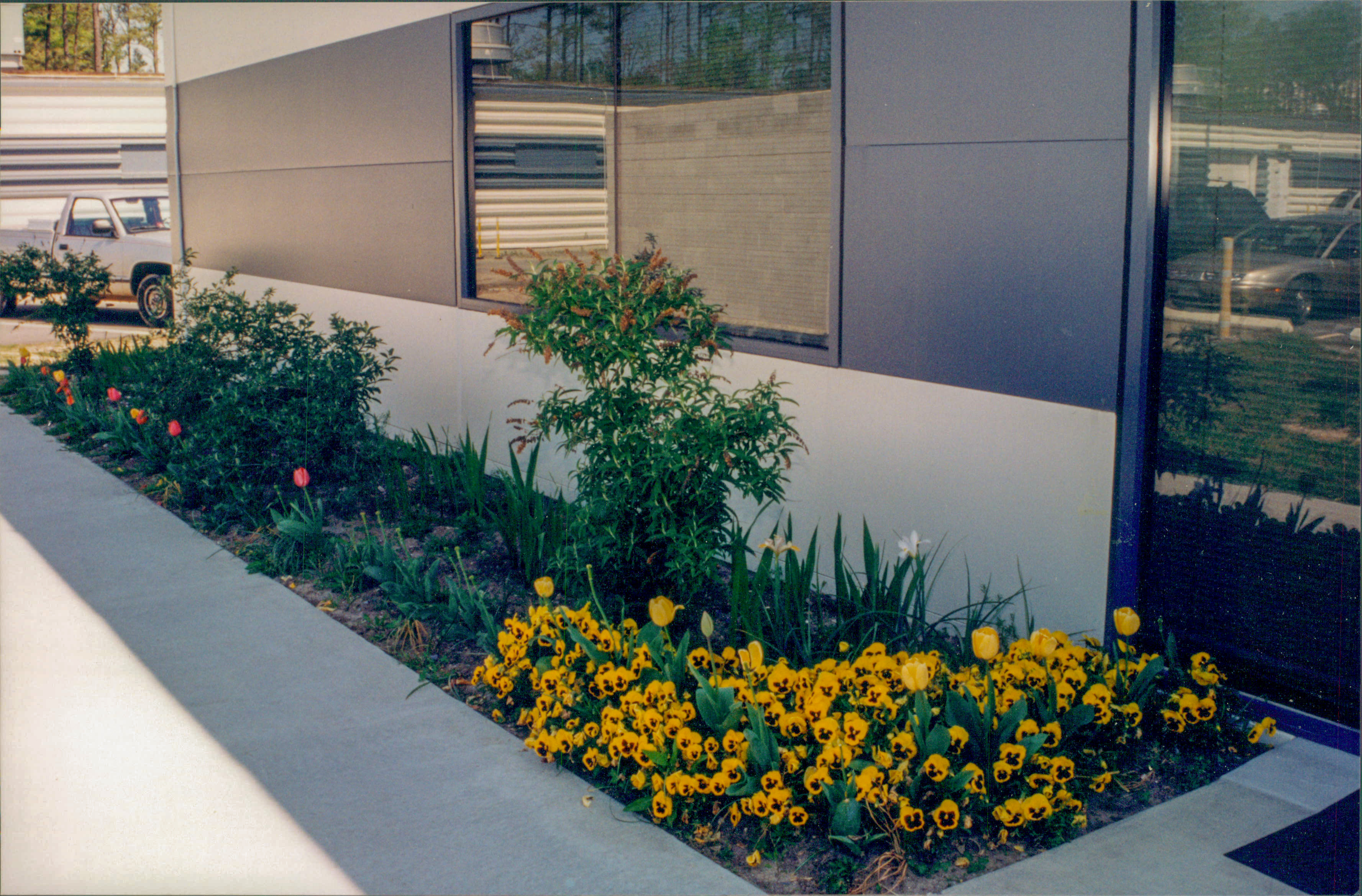 Welcoming spring flowers on accelerator site, 1997