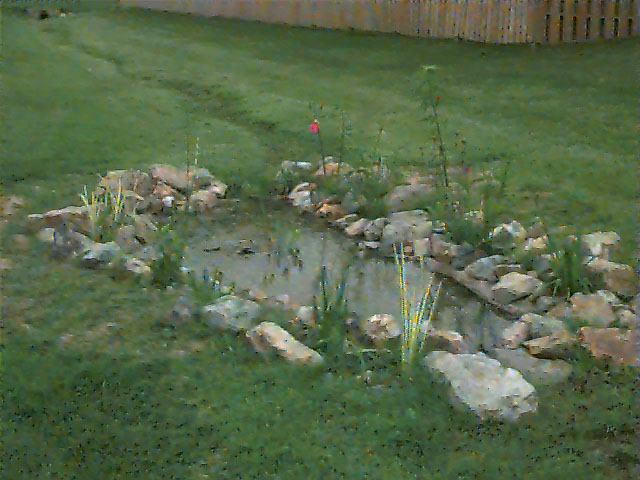 The rain garden starting to bloom