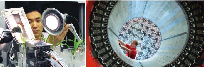Plant imaging - physics detector